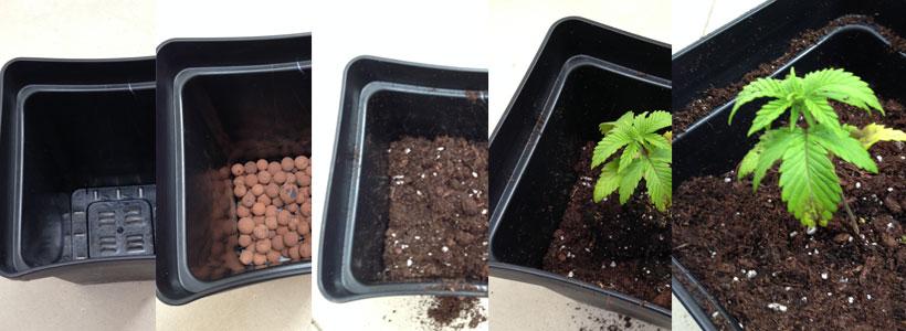 primeros pasos en el cultivo de marihuana